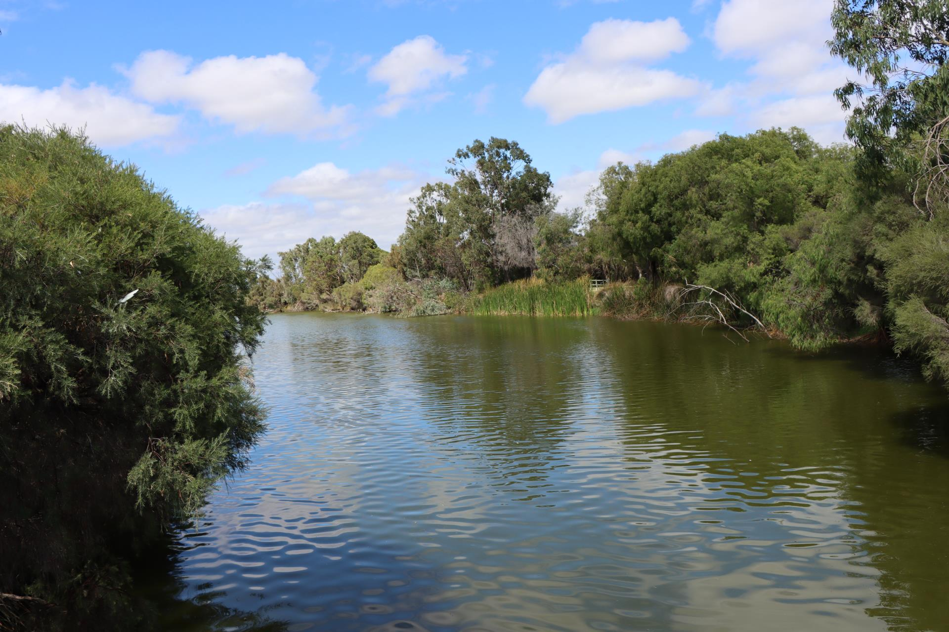 Update on the Lower Vasse River